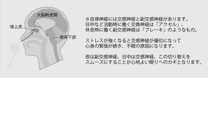 自律神経について